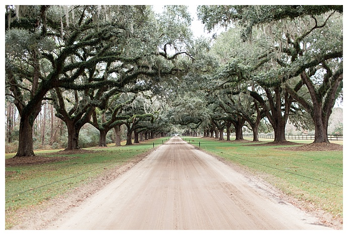 Avenue of the Oaks Boone Hill Plantation