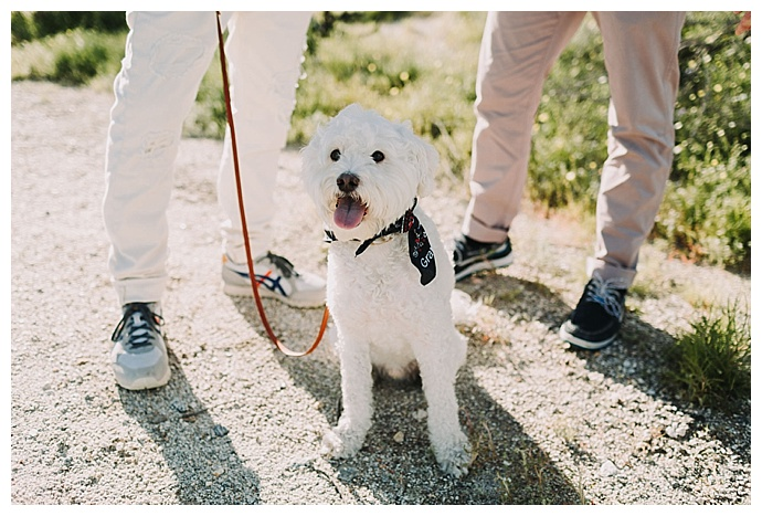 engagement-photos-with-dogs-lets-frolic-together-photography