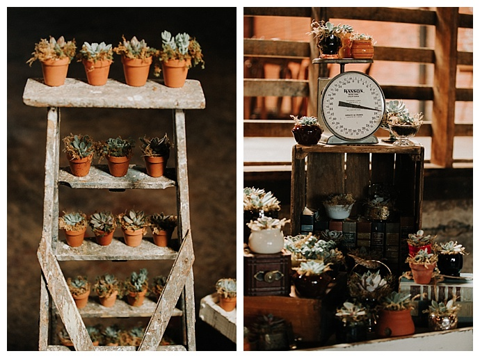 t-and-k-photography-succulent-wedding-favor-display