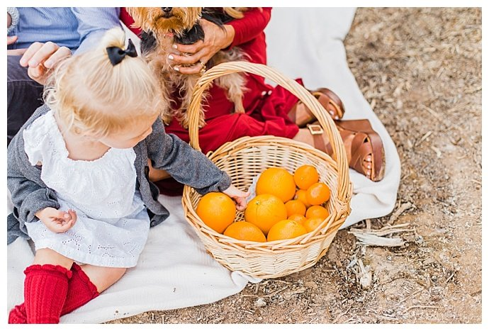 dana-sophia-photography-orange-picking-family-pictures