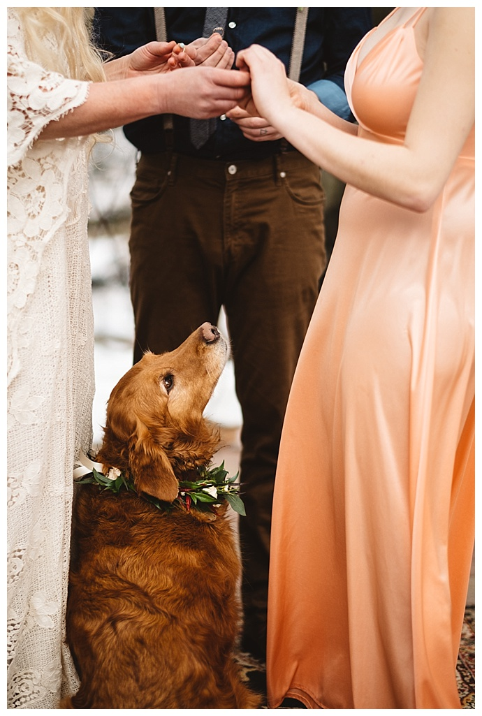 dogs-in-weddings-kate-merrill-photography