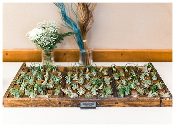 air-plant-wedding-favors-alexandra-knight-photography