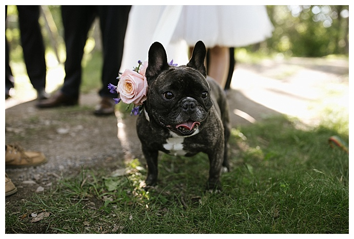 french bulldog flower girl