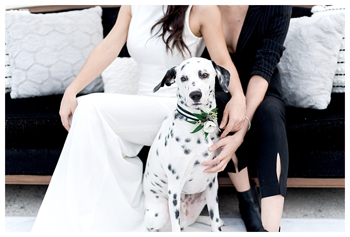 dog-floral-wedding-collar-kristen-weaver-photography