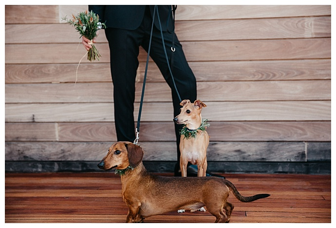 maria-campbell-photography-dogs-in-weddings