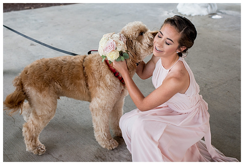Pets at Weddings Photos