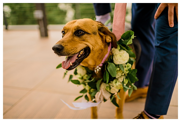 Dog in Wedding with Floral Garland