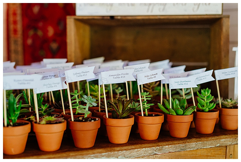 Potted Plants for Wedding Favors