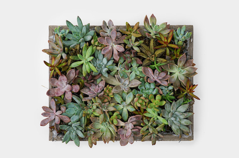 Image for Easy 7-Step Succulent Wall DIY for a Big-Impact Design (with Little Effort!)