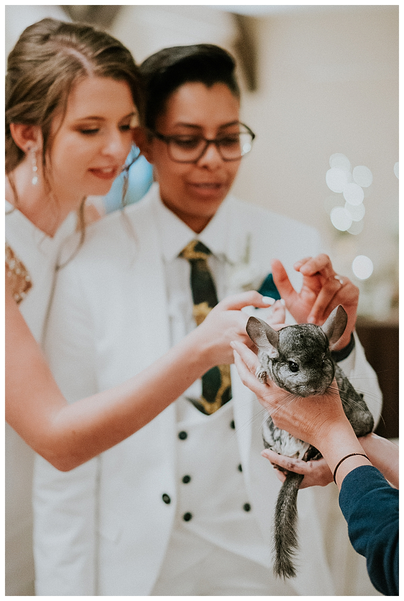 animal-petting-at-wedding