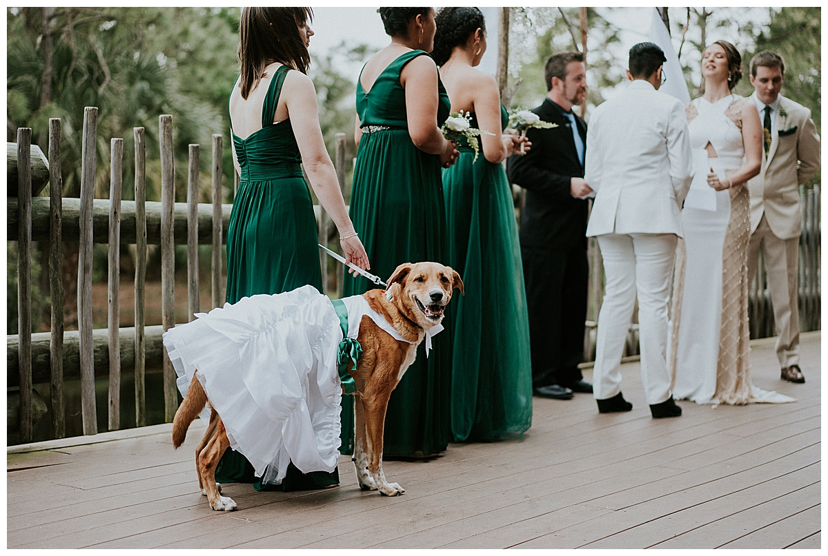 dog-wearing-a-bridesmaid-dress