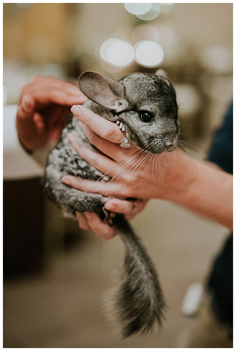 zoo-wedding-with-animal-handlers-1