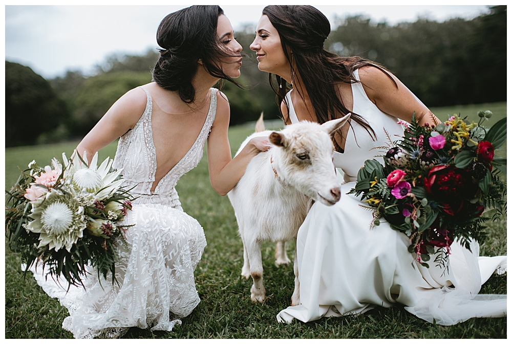 animals-at-weddings