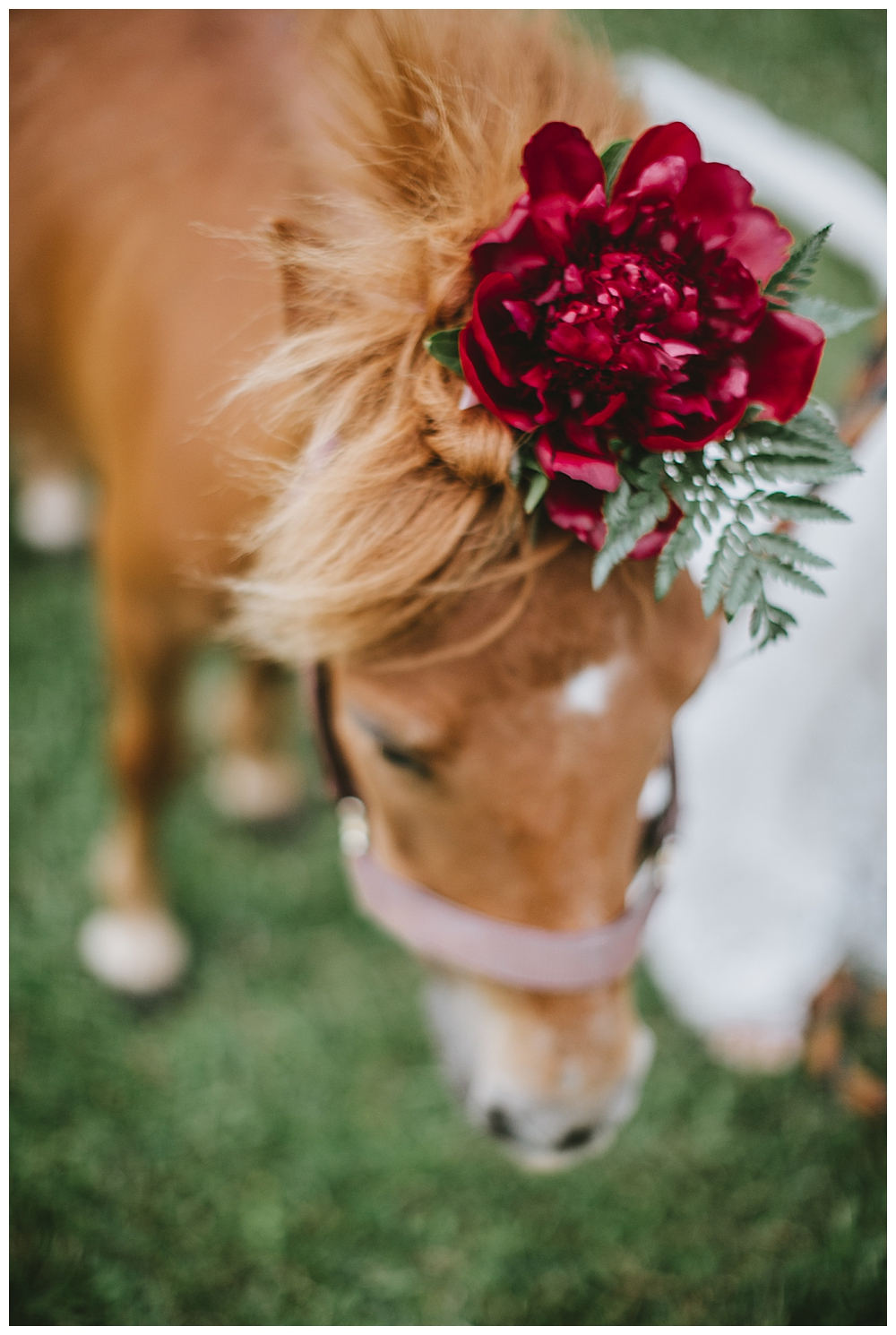pony-with-flower-hat-wedding